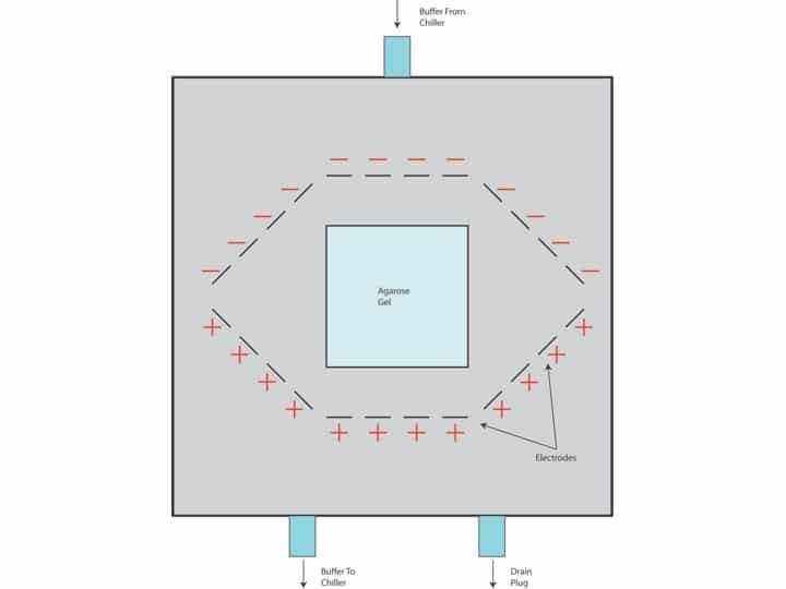 pulsed field gel electrophoresis applications